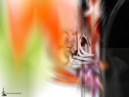 ima_ali_13